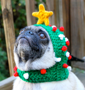 A pug wearing a knit Christmas tree hat