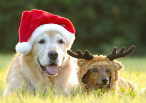 A big dog in a santa hat laying in the grass next to a small dog in a reindeer costume