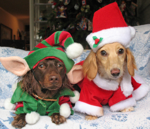 A brown puppy in an elf costume next to a blonde puppy in a santa costume