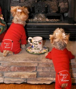 Two small dogs in pajamas looking at the fireplace