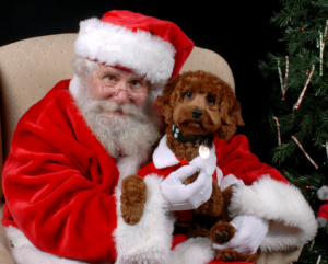 A brown dog sitting on Santa's lap