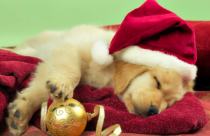 A sleeping golden retriever puppy wearing a Santa hat