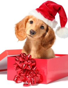A blonde puppy sitting in a box wearing a Santa hat